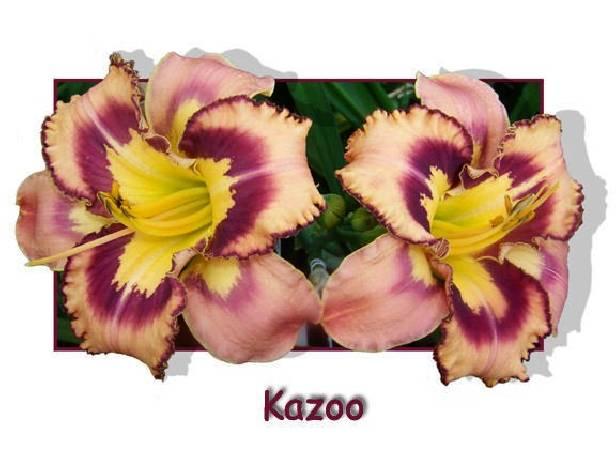 Liliowiec 'Kazoo' Hemerocallis