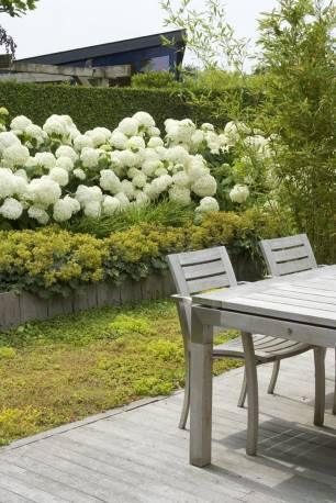 Hortensja drzewiasta 'Annabelle' Hydrangea arborescens