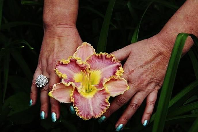 Liliowiec 'Lavender Tutu'