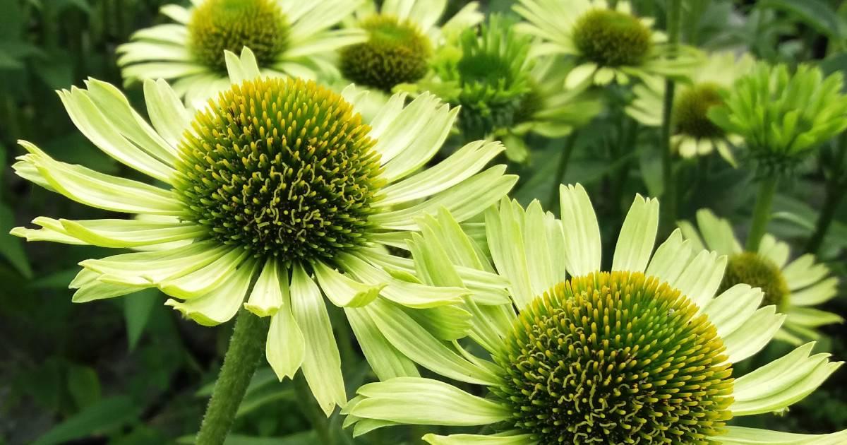 Szkółka Roślin Kwiaty Ogrodowe Rośliny Ozdobne Albamar